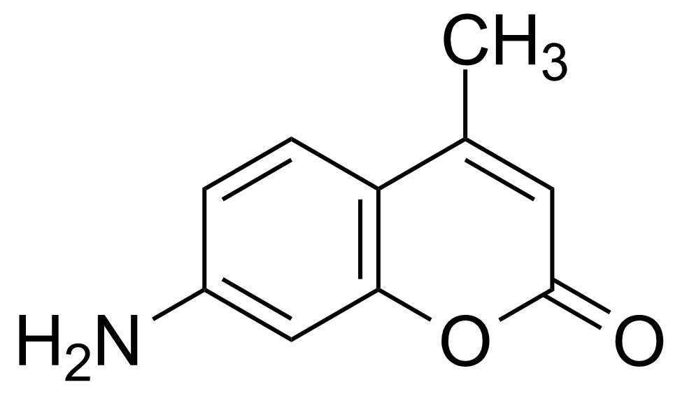 Structure of 7-Amino-4-methylcoumarin